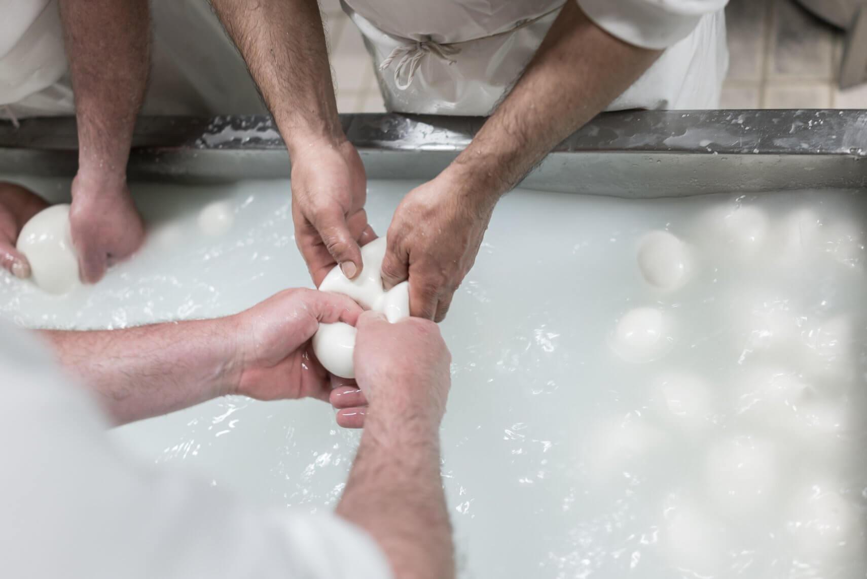 Mozzarella di Bufala Produktion